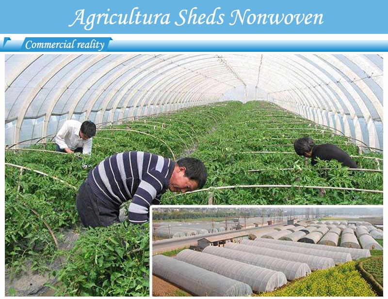 biodegradable ground weed control fabric mat wholesale for greenhouse-2