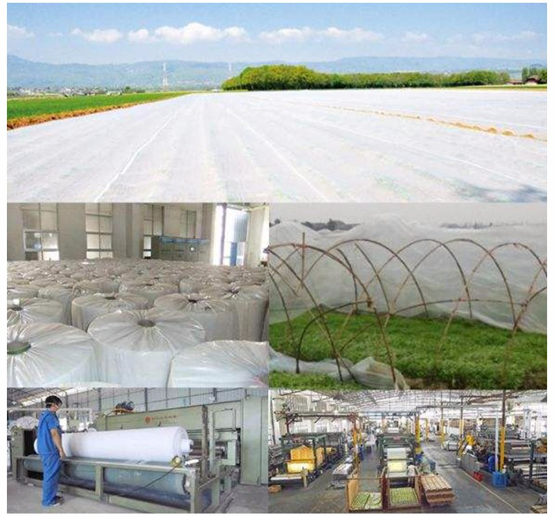 biodegradable ground weed control fabric mat wholesale for greenhouse-3
