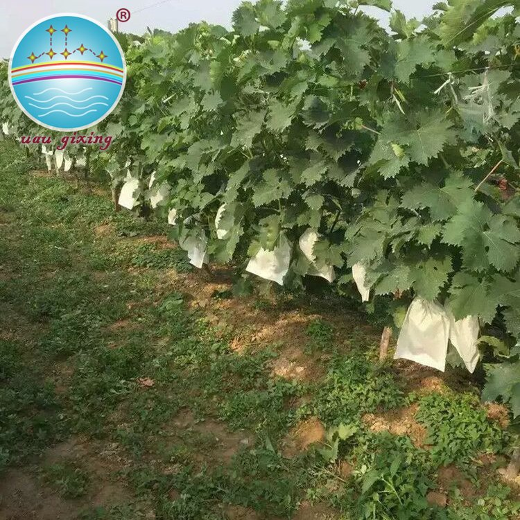 Nanqixing Eco-friendly Nonwoven Fabric For Making Friuts And Vegetables Cover Bags Nonwoven For Agriculture image20